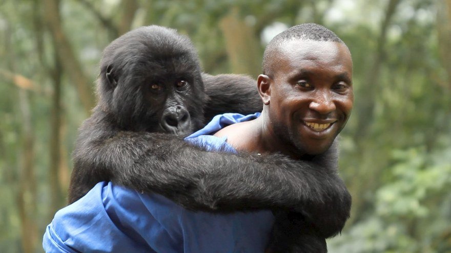 Virunga Movie Andre Bauma