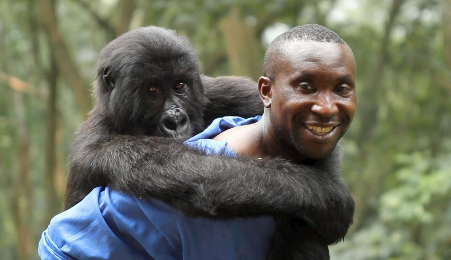 Virunga documentary feature film